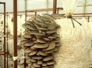 полиэтиленовые мешки для грибов